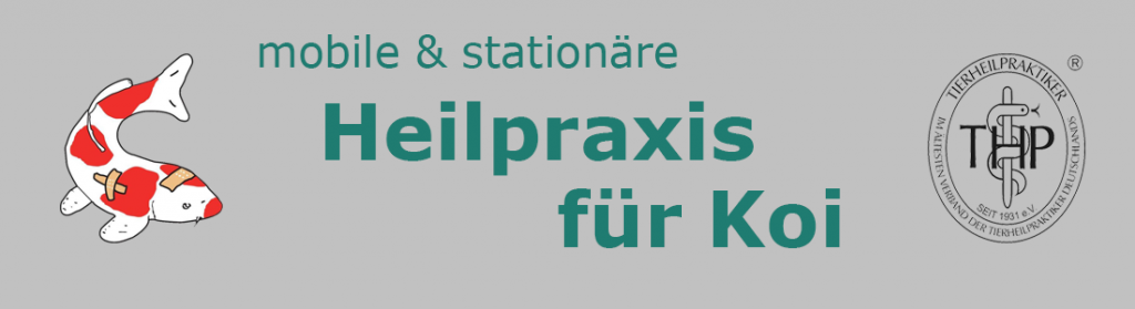 Koi-Heilpraxis